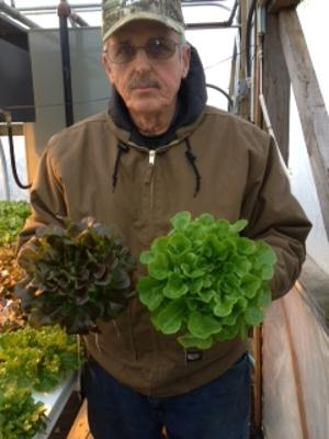 hydroponics lettuces local grown